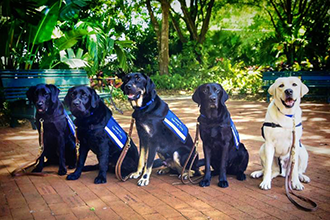 MedVets Group of Dogs